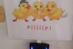 piiip-scaled
